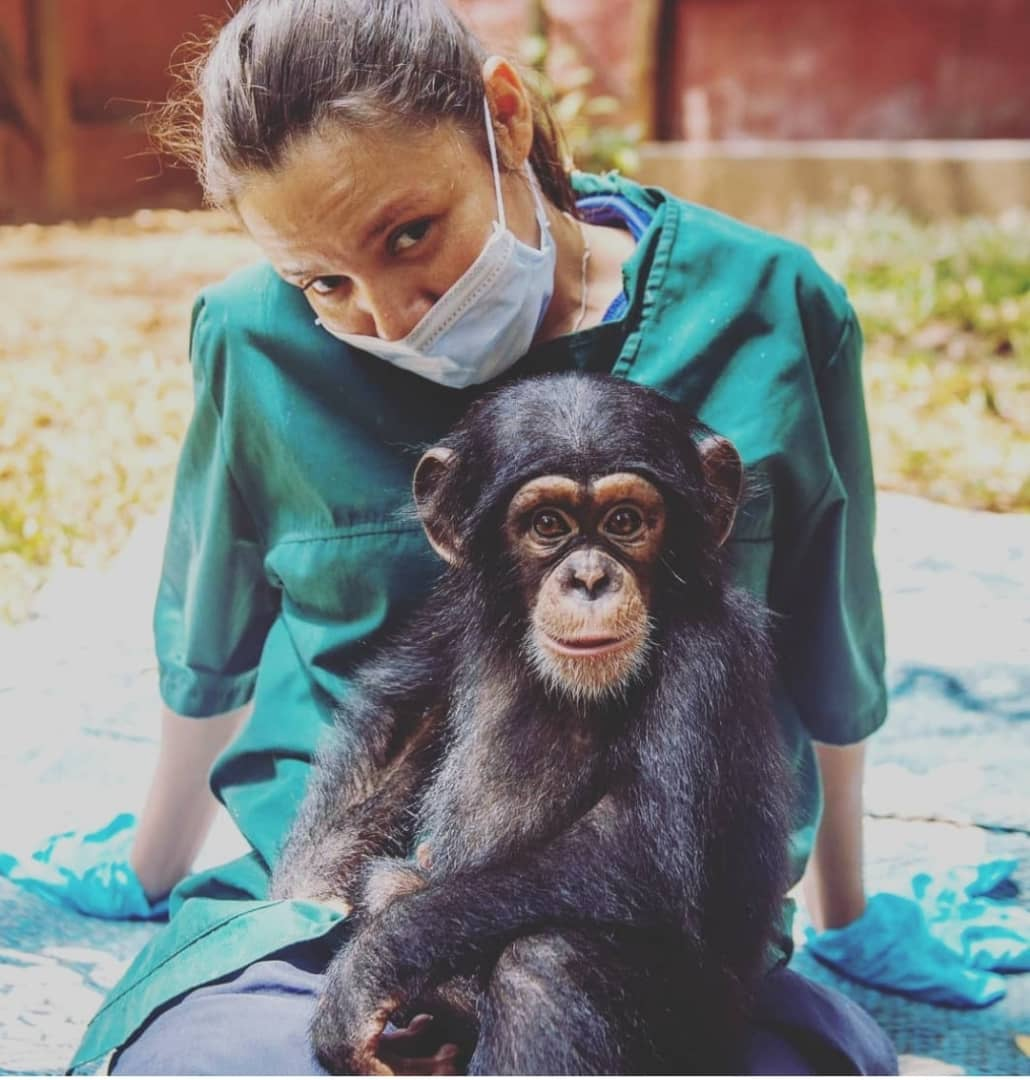 Vet Narrates Experience With Chimps